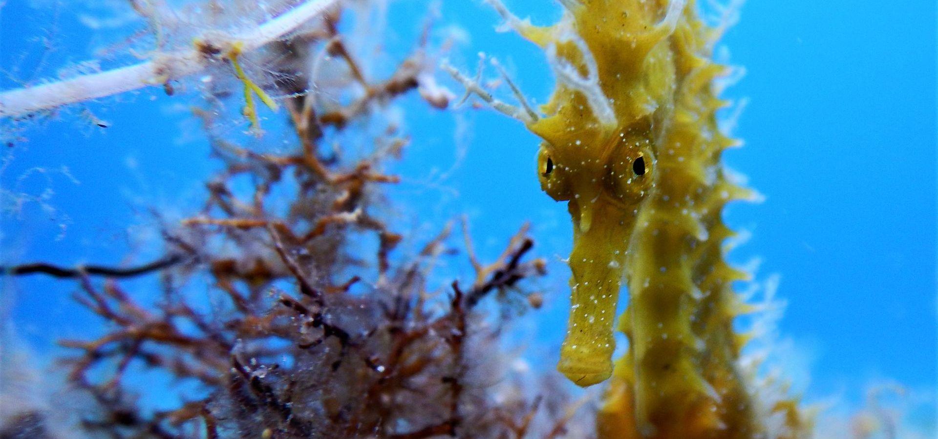 Fascinating Micro Life